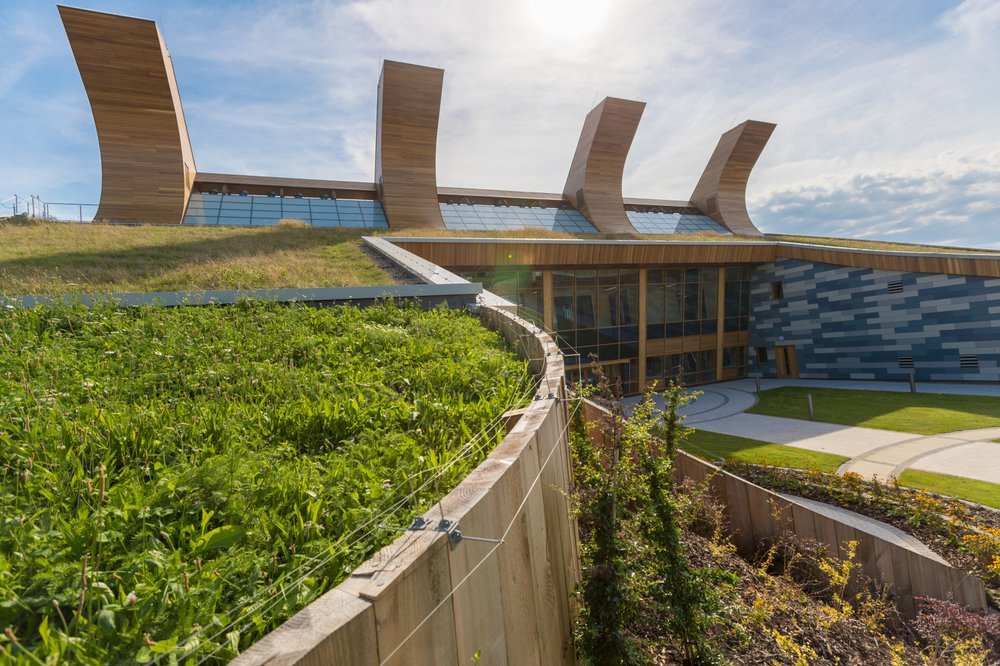 A close up of the living roof on top of the GSK Building at the University of Nottingham