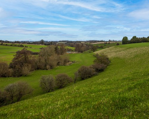 Picture of the space for the Woodland area at Blenheim Estate