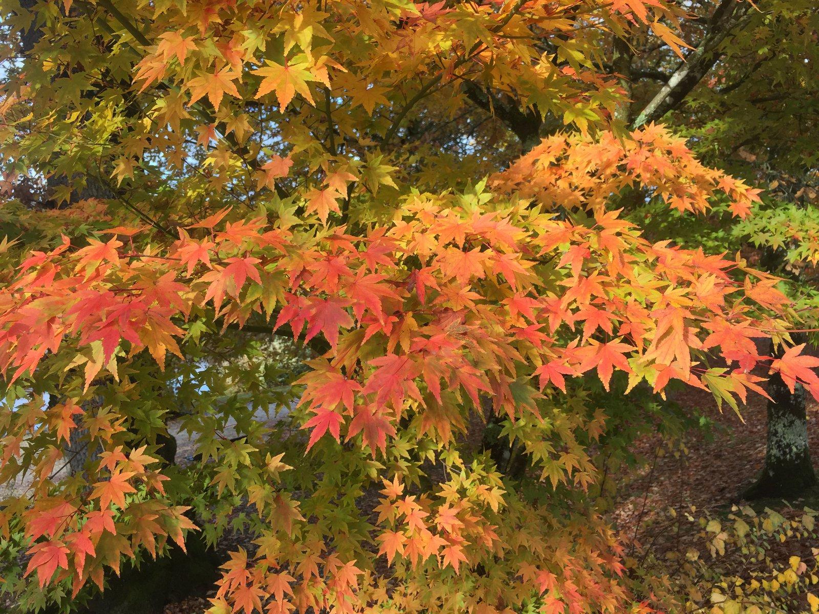 Image of Autumnal tree scene