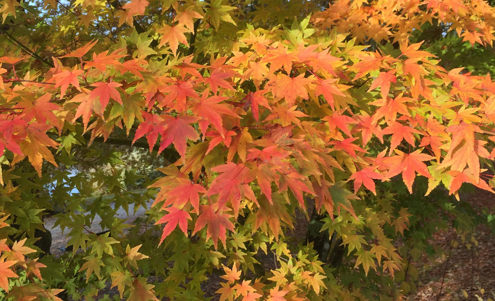A photograph depicting colourful autumnal leaves.